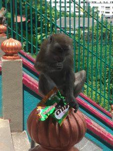 Macacos na Batu Caves. Cuidado.