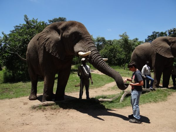 Alimentando o Elefante