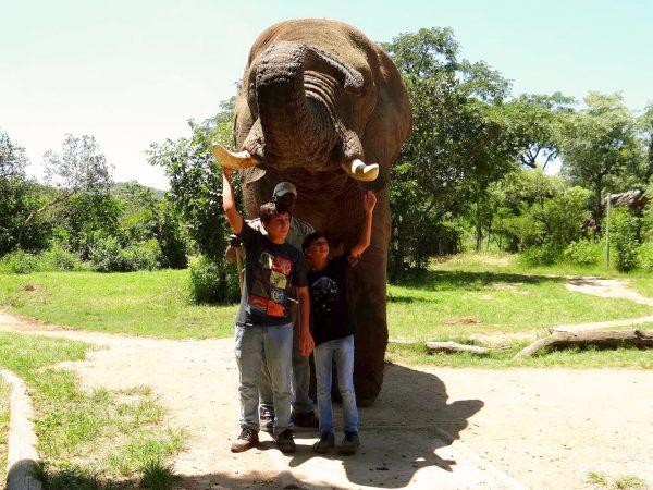 Interação com o Elefante