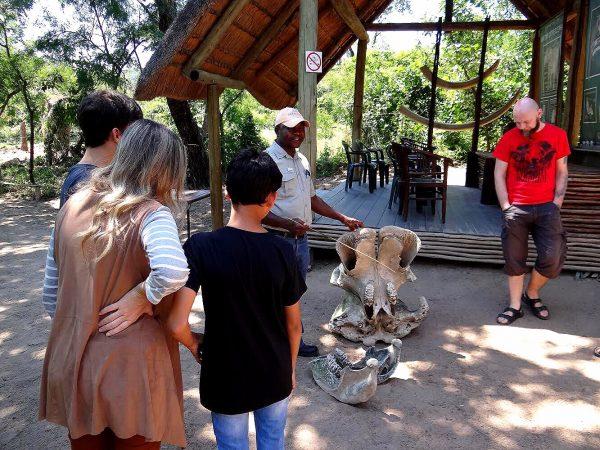 Aula sobre a anatomia dos elefantes