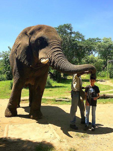 Beijo do Elefante